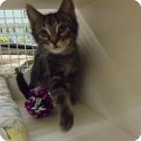 Adopt A Pet :: Jordan - Riverside, RI
