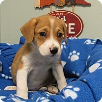 Adopt A Pet :: Dude - Groton, MA