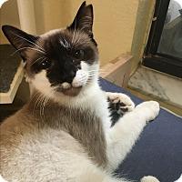 Adopt A Pet :: Simon - Lauderhill, FL