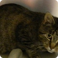 Adopt A Pet :: Ginger - Columbus, NE