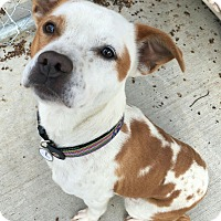 Adopt A Pet :: Ruby - Hanna City, IL
