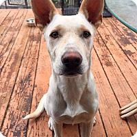 Adopt A Pet :: Sadie - Santa Ana, CA