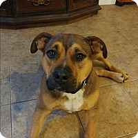 Adopt A Pet :: Macki (COURTESY POST) - Baltimore, MD