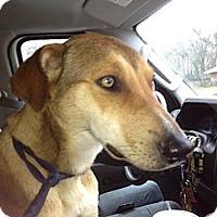 Adopt A Pet :: Tesla - Kingwood, TX