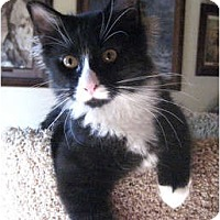 Adopt A Pet :: Bitsy - Palmdale, CA