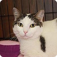Adopt A Pet :: Polly (LE) - Little Falls, NJ