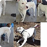 Adopt A Pet :: Mr. Wiggles - Wilmington, NC