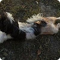 Adopt A Pet :: Eep - Fort Riley, KS