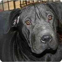 Adopt A Pet :: Suki - Gilbert, AZ