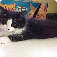 Adopt A Pet :: Picler - Byron Center, MI