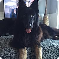Adopt A Pet :: Chloe - West LA, CA
