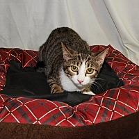 Adopt A Pet :: Sonnet - Jackson, MS