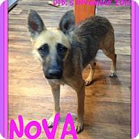 German Shepherd Dog Dog for adoption in Mount Royal, Quebec - NOVA