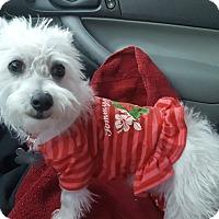 Adopt A Pet :: Lindy - Las Cruces, NM