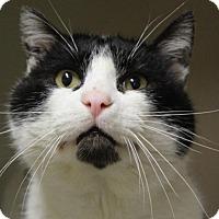 Adopt A Pet :: VEGAS - Red Bluff, CA