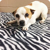 Adopt A Pet :: Pope - Foster Care - Oxford, MS