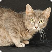 Adopt A Pet :: Daffodil - Newland, NC