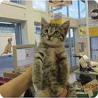 Adopt A Pet :: Skippy - Sterling Hgts, MI