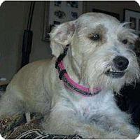 Adopt A Pet :: Trixie - Oceanside, CA