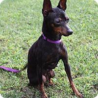 Adopt A Pet :: Jada - Nashville, TN