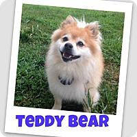 Adopt A Pet :: Teddy Bear - Brazil, IN