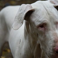 Adopt A Pet :: Elsa - Baden, PA