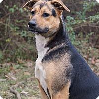 Adopt A Pet :: Alexa - Westport, CT