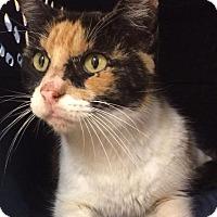 Adopt A Pet :: Cassandra - Spring, TX