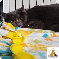 Adopt A Pet :: Marie - Eighty Four, PA