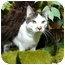 Photo 4 - Domestic Shorthair Cat for adoption in New York, New York - Jules