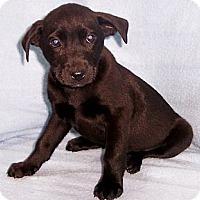 Adopt A Pet :: Carlo - Byrdstown, TN
