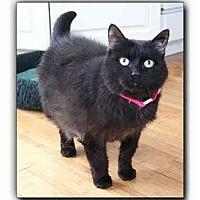 Adopt A Pet :: Missy - Howell, MI