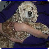 Adopt A Pet :: Sandy - Hamilton, ON