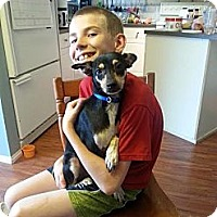 Adopt A Pet :: Clive - Calgary, AB