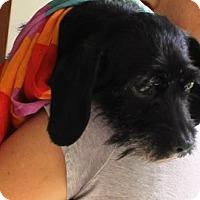 Adopt A Pet :: Lexi - Solebury, PA