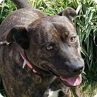 Adopt A Pet :: Greta - Monroe, MI