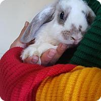 Adopt A Pet :: Piper - Los Angeles, CA
