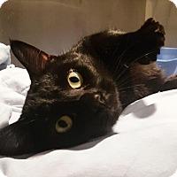 Adopt A Pet :: Ramsey - Lafayette, NJ