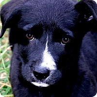 Adopt A Pet :: RENO(GENTLE-SO LOVING!! - Wakefield, RI