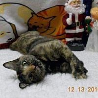 Adopt A Pet :: Bindi - Santa Fe, TX
