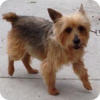 Adopt A Pet :: Sunshine - Jacksonville, FL