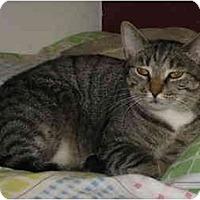 Adopt A Pet :: Prince - Cincinnati, OH
