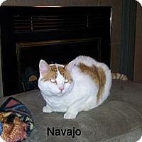 Adopt A Pet :: Navajo - Catasauqua, PA