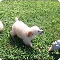 Adopt A Pet :: Landon - Cincinnati, OH