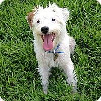 Adopt A Pet :: Monroe in Houston - Houston, TX
