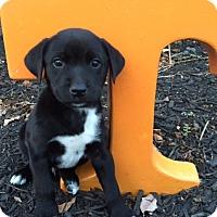 Adopt A Pet :: Dobbs - Bedminster, NJ