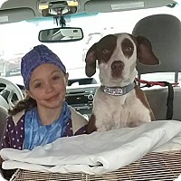 Adopt A Pet :: Mila - Sparta, NJ