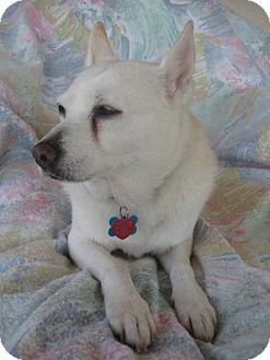 American Eskimo Dog Mix Dog for adoption in Bradenton, Florida - Maggie of Deltona, FL