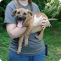 Adopt A Pet :: Perry - Ashburn, VA