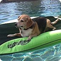 Adopt A Pet :: Peete - Phoenix, AZ